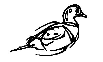 Art autochtone (modèle)